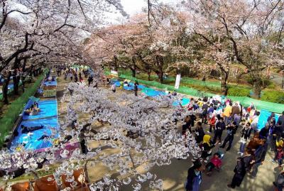夜の花見に備えて場所取りをする人たち=2014年3月、上野公園