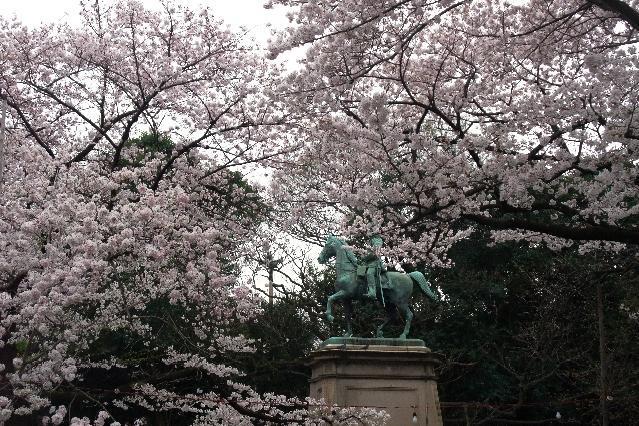 ソメイヨシノの原木の候補とされる木は小松宮親王像の右側=2010年4月、東京・上野公園、千葉大提供