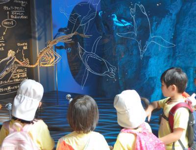 福井県立恐竜博物館とのコラボ企画。現生のペンギンと、ペンギンの生態に近いとされる古代生物の標本を見比べられる=2014年7月18日