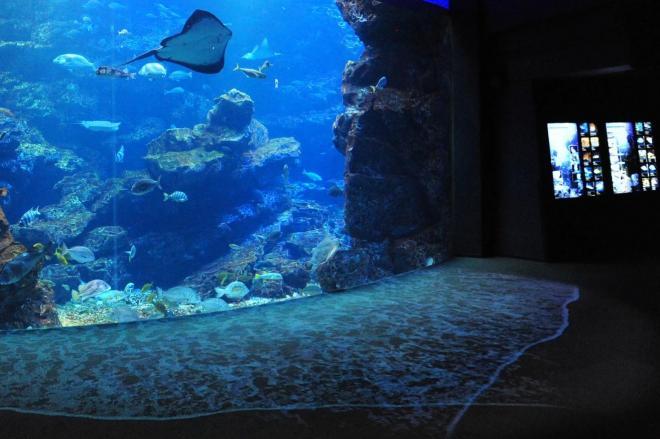 大水槽から水があふれ出す、京都水族館の斬新な演出=京都水族館提供