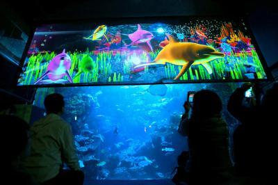 以前のプロジェクションマッピング=2014年11月20日、京都水族館