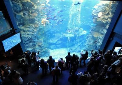 エイやウミガメなどが展示されている大水槽=2012年3月14日