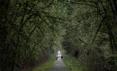映画「スタンド・バイ・ミー」で、主人公の少年たちが歩いた線路は、今はない。当時の面影を残す廃線跡を愛犬を連れた女性が駆けていった=2012年12月21日、オレゴン州コテージグローブ