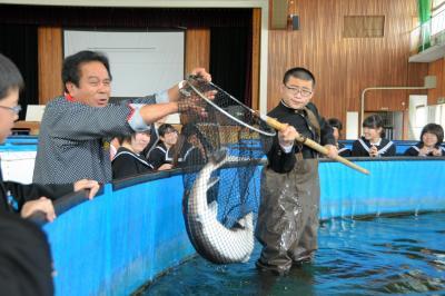 東かがわ市で養殖されているチョウザメ=2015年4月