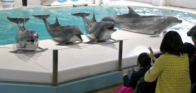 北海道小樽市の「おたる水族館」では6頭のバンドウイルカのうち5頭が和歌山県太地町で捕獲されたもの=2015年5月20日