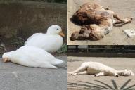 「まるで行き倒れ」と話題になった動物たちの寝相