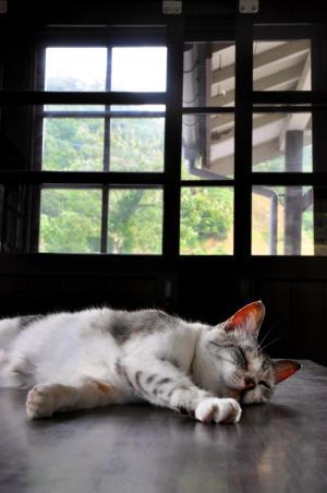 駅の待合室のテーブルに寝転がる猫=2010年6月19日、京都府舞鶴市のJR松尾寺駅