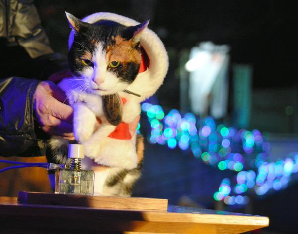 【2014年12月7日】点灯スイッチを押すたま駅長(右)とニタマ駅長(左)=紀の川市貴志川町神戸