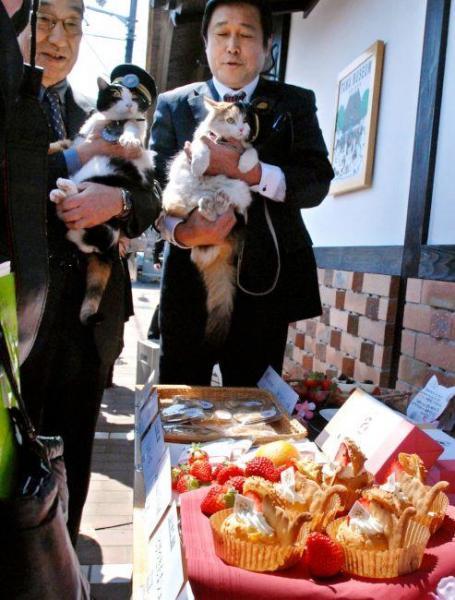 2012年3月21日 たまカフェで新作菓子のコンテスト。たま(左)とニタマの両駅長も駆けつけた=紀の川市貴志川町神戸