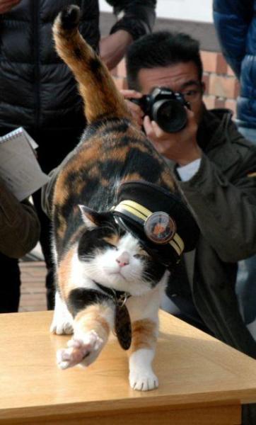 2010年12月15日 大韓航空のCM撮影中の「たま駅長」=和歌山県紀の川市貴志川町