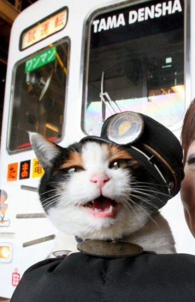 2009年3月2日 お披露目された「たま電車」とたま駅長=2日午後、和歌山市の和歌山電鉄伊太祈曽駅、南部泰博撮影