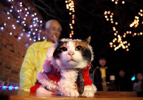 2010年12月4日 サンタクロースの衣装を着た「たま駅長」と点灯されたイルミネーション=紀の川市貴志川町神戸