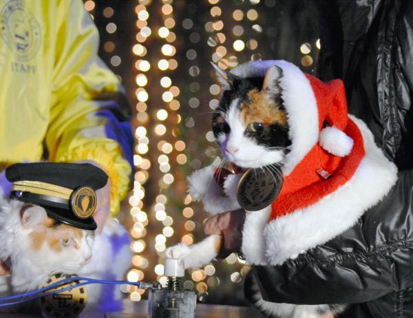 【2014年12月7日】クリスマスイルミネーションの点灯スイッチを押すたま駅長