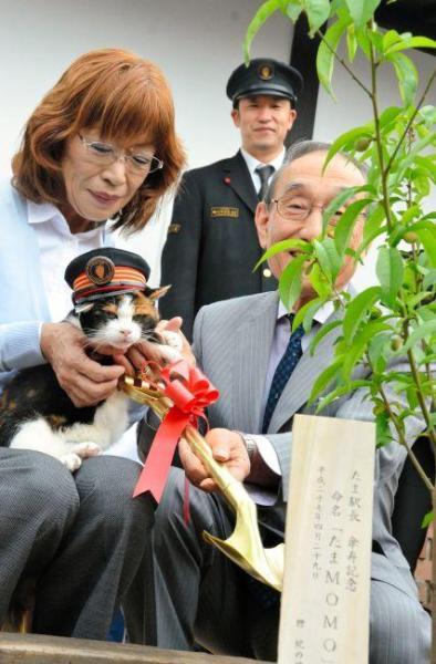 2015年4月29日 桃の木を植樹するたま駅長=紀の川市の貴志駅