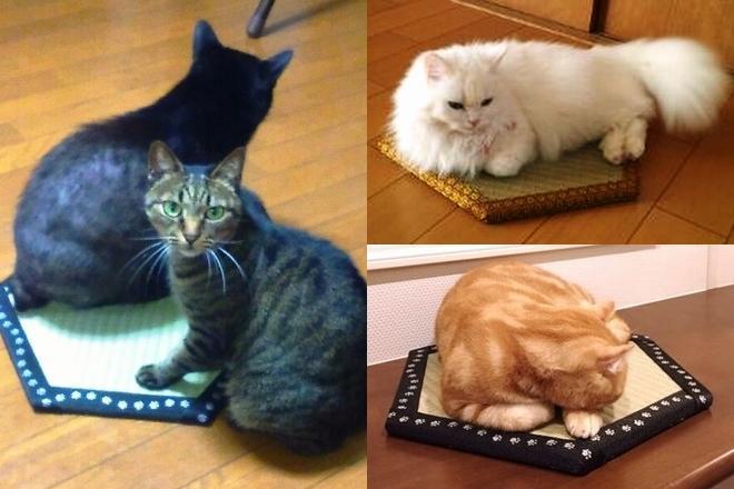 猫ホイホイ畳に入った猫