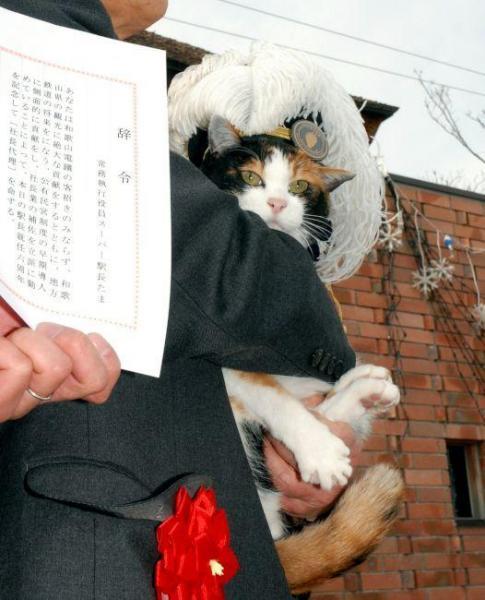 2013年1月5日 社長代理就任の辞令を受けるたま駅長=和歌山県紀の川市