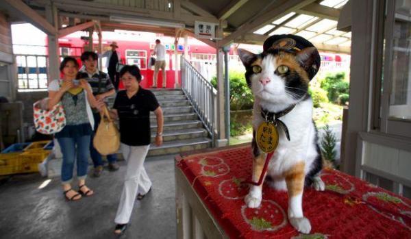 2008年7月15日 貴志駅の改札口で乗客を見守る三毛猫の「たま駅長」。いつも堂々としている=和歌山県紀の川市