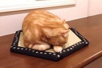 眠ってしまった猫も
