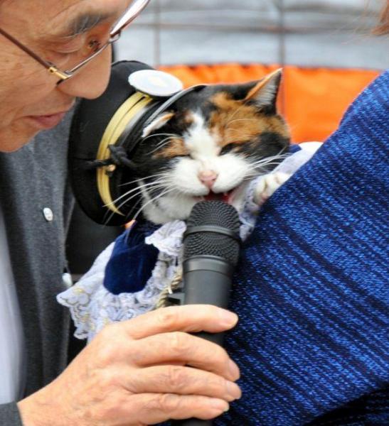 2010年1月3日 執行役員に出世。小嶋社長からマイクを向けられ、ニャーと喜びの声をあげるたま駅長=3日、和歌山県紀の川市貴志川町、張守男撮影