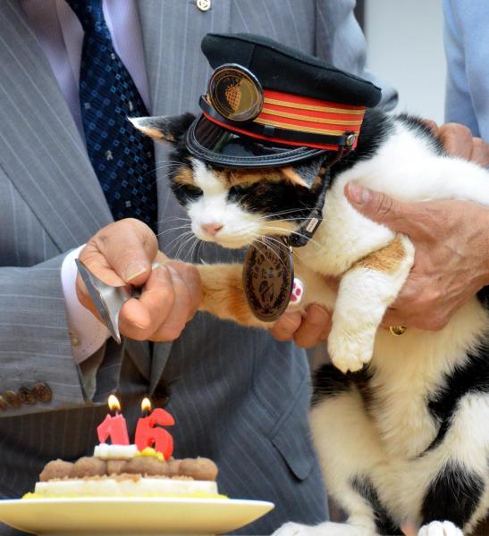 【2015年4月29日】「16」のロウソクを立てたケーキに入刀するたま駅長=紀の川市の貴志駅