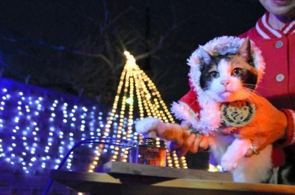 2013年12月1日 イルミネーションの点灯スイッチを押すたま駅長=紀の川市貴志川町神戸
