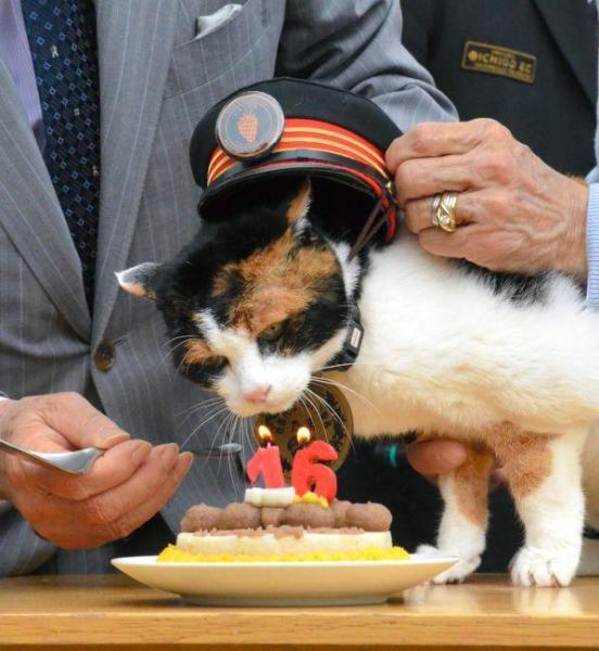 2015年4月29日 16歳の誕生日。「16」のロウソクを立てたケーキを贈られたたま駅長=紀の川市の貴志駅