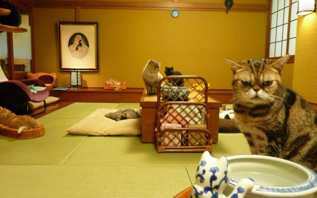 約20匹と触れ合える北本店の和室=「猫の時間」提供