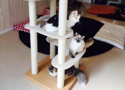 約150平方㍍の部屋に15匹が暮らす「セカンドハウス」=「猫の時間」提供