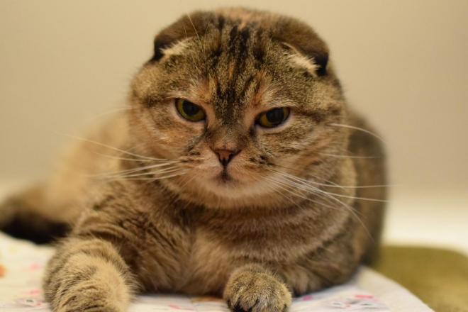 隠居スペース「セカンドハウス」で暮らす「むぎちゃん」=「猫の時間」提供