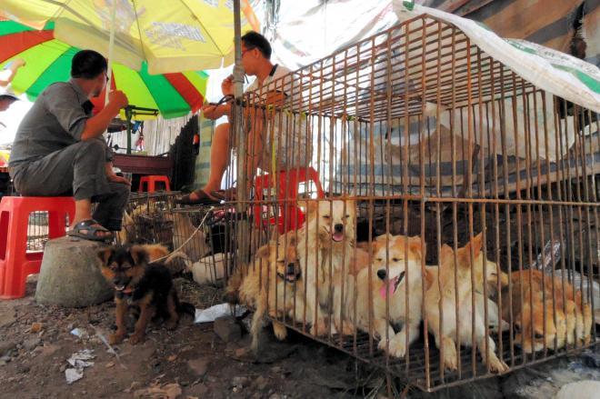広西チワン族自治区の玉林市で売られていた生きた犬。売っていた男性は「買った人が犬をどうするかは知らない」と答えた=2015年6月21日、金順姫撮影