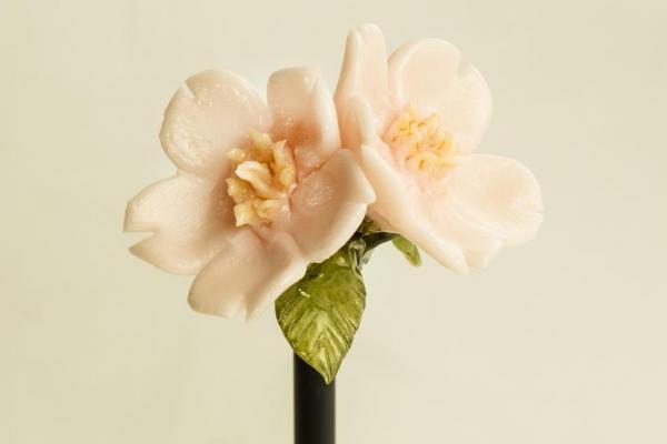 花開いた「サクラ」