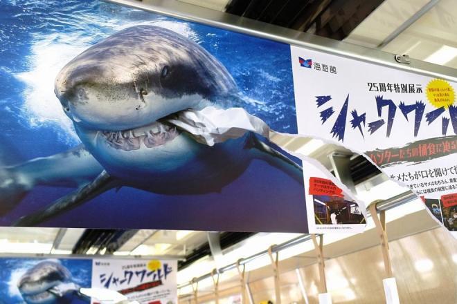 ホホジロザメが食いちぎったように破けたポスター。裏はシュモクザメになっている