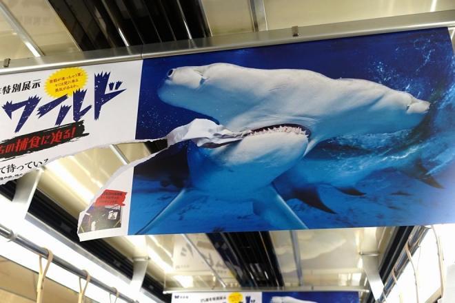 シュモクザメが食いちぎったように破けたポスター。裏はホホジロザメになっている