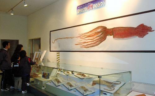 ダイオウイカのカラー魚拓やイカの模型標本のコーナー=鳥取県岩美町牧谷の山陰海岸学習館