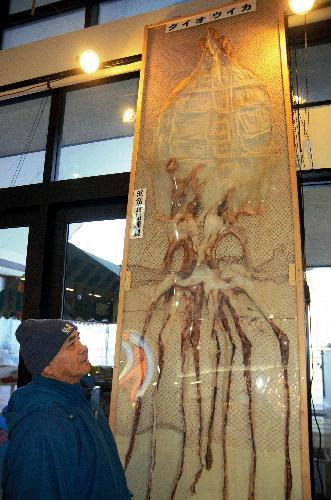 展示されたダイオウイカのスルメ=富山県射水市海王町