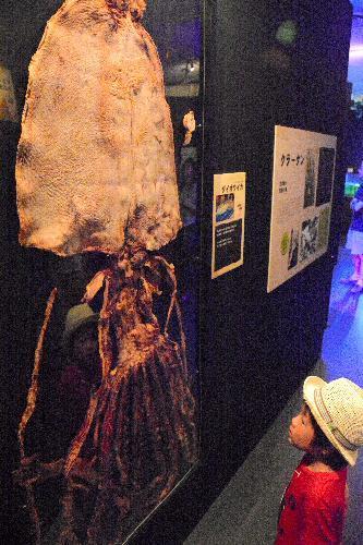 須磨海浜水族園に展示されているダイオウイカの乾燥標本=神戸市須磨区若宮町1丁目