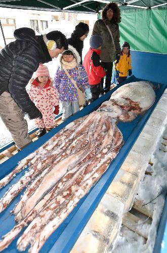 屋外に冷凍展示されているダイオウイカ=札幌市中央区の円山動物園、恵原弘太郎撮影