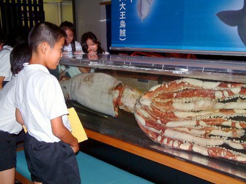 巨大なダイオウイカに驚く児童たち=山口県萩市堀内の萩博物館で