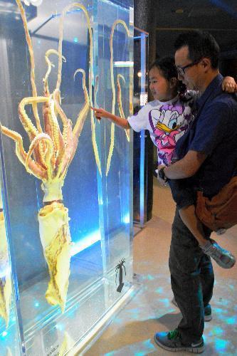 展示されたダイオウイカを見る親子=神奈川県三浦市の油壺マリンパーク
