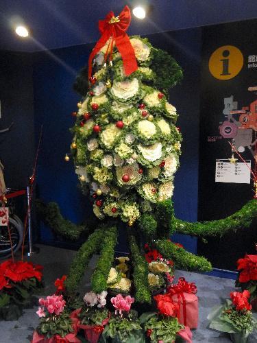 ダイオウイカのクリスマスツリー=石川県ののとじま水族館提供