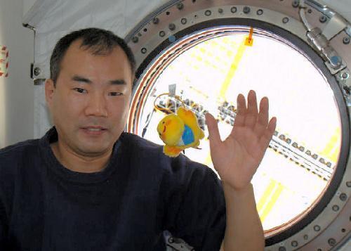 国際宇宙ステーションで標語県のマスコット「はばタン」のぬいぐるみを浮かべる野口聡一さん=2010年1月、兵庫県提供