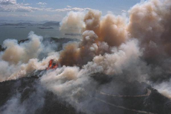 岡山県玉野市の山火事。燃え広がる王子が岳=1994年8月11日