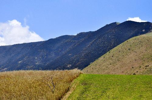 別府の山火事。焼け焦げた山肌=2014年4月25日、大分県別府市、河合達郎撮影