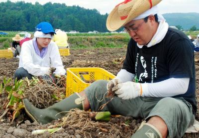 芋煮会シーズンを控え、里芋の収穫が進む=2010年8月31日