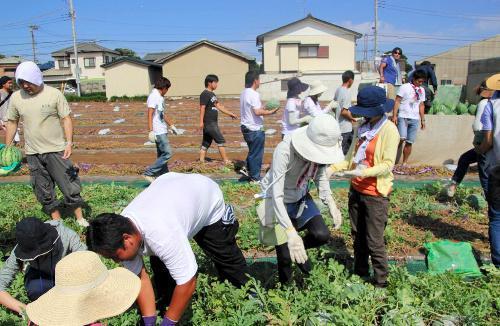 農作業をしながら交流を深める婚活「アグリdeデート」=神奈川県三浦市提供