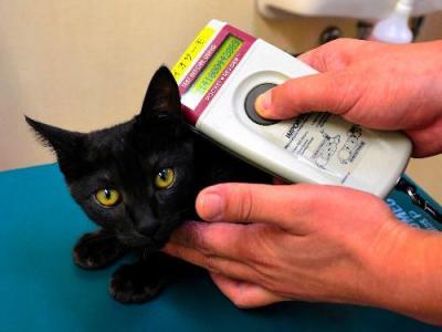マイクロチップを装着したネコ。首元に読み取り機を当てると、15ケタの番号が表示される=浜松市中区のしかたに動物病院