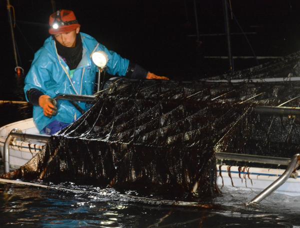 有明海でクラゲを水揚げする漁師。もともとはノリ養殖が専業という=福岡県柳川市