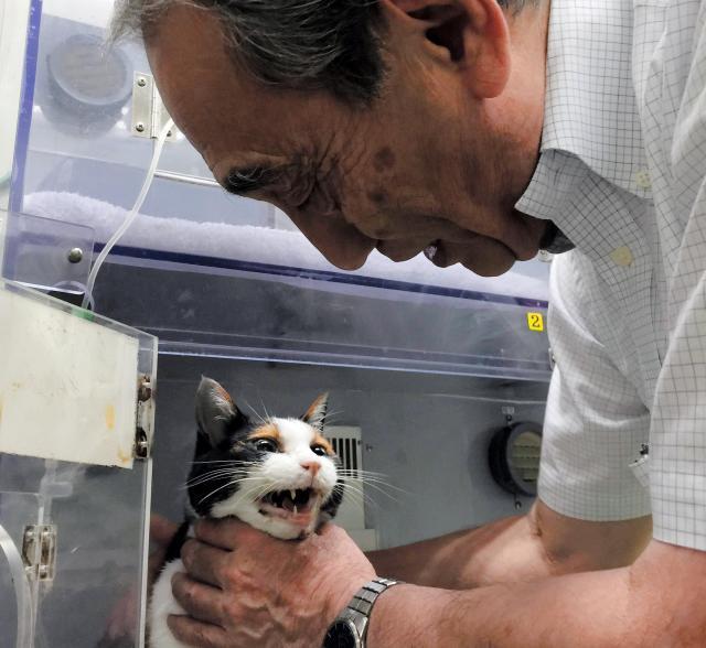 病院に見舞いに来た和歌山電鉄の小嶋光信社長に「ニャー」とこたえるたま駅長=2015年6月21日、同電鉄提供