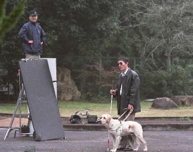 脚立に上ってラフィーの視線をやや上に向けさせようとするドッグトレーナーの宮忠臣さん=2003年11月、京都府亀岡市の盲導犬訓練センターで