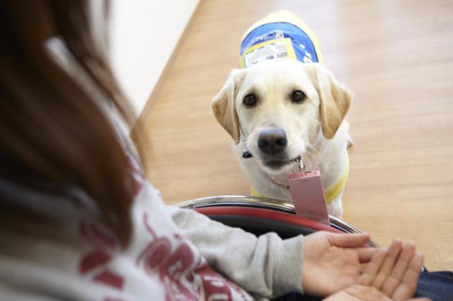 落とした携帯電話を拾う介助犬=同協会提供